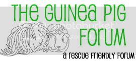 The Guinea Pig Forum - Powered by vBulletin